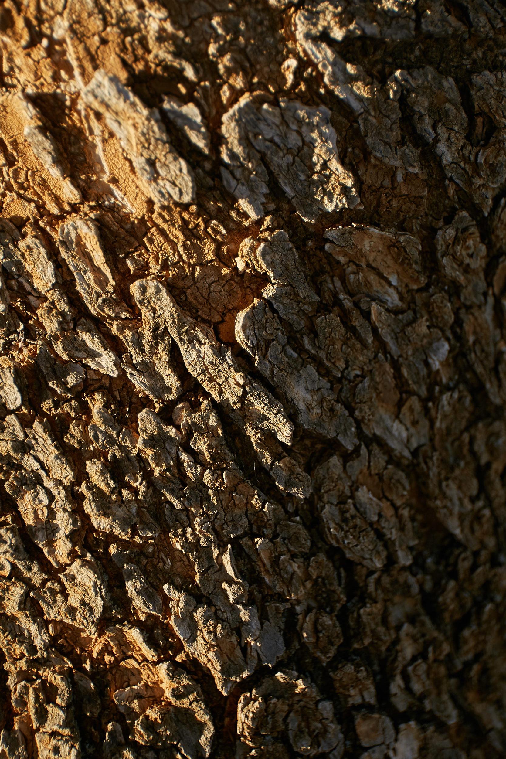 Textures, olive tree